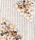 Background of seashells on the net for fishing Stock Image