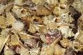 Background Of Seashells