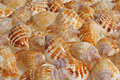 Background of shells Stock Photo