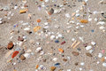 Background of shells on the beach Royalty Free Stock Images