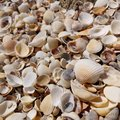 Background from small varied seashells. Royalty Free Stock Photo
