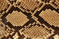 Background snake skin pattern brown Royalty Free Stock Images