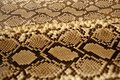 Background snake skin pattern brown Royalty Free Stock Photo