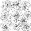 Background sprite texture ornament hibiscus flowers