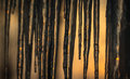Background, sun dawning on icicles hanging low from roof edge. Abstract of natural icicle formation, lighted by sunrise.