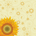 Background  with  sunflower Royalty Free Stock Photo