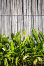 bamboo fencing panels and green bushes Royalty Free Stock Photo