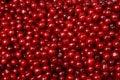Background texture cherry Royalty Free Stock Photo