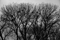 stock image of  Background, texture, dark trees with nests.