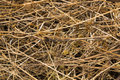 Background texture of dried grass Royalty Free Stock Photo