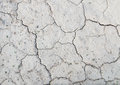 Background texture of a dried up cracked earth with small plant Royalty Free Stock Photo