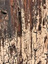 Background texture - Painted telephone pole Royalty Free Stock Photo