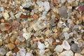 Background texture with pebble and sea shells on beach Stock Photos