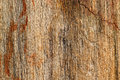 Background texture photo of petrified ancient wood changing into Royalty Free Stock Photo