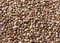 Background, texture, the rump buckwheat