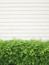 Background texture from a white wall with parallel horizontal lines and green plants Royalty Free Stock Photo