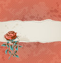 Background with torn paper and rose red vintage Stock Images