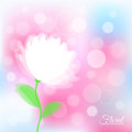 Background with transparent delicate flower white light natural Stock Images
