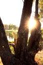 Background tree trunk Стоковые Изображения RF
