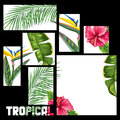 Background with tropical leaves and flowers. Palms branches, bird of paradise flower, hibiscus Royalty Free Stock Photo