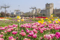 Background tulips in the background of the yedikule istanbul landscape view beautiful pink double fortress yedikulein turkey Royalty Free Stock Photography