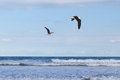 Background two flying seagull sea blue sky Royalty Free Stock Photo