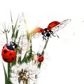 Background with vector green grass, dandelions and ladybirds Royalty Free Stock Photo