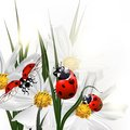Background with vector scenery cosmos flowers and red ladybirds Royalty Free Stock Photo