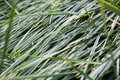 Background of a wet green grass Royalty Free Stock Photos