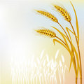 Background with wheat Royalty Free Stock Photos