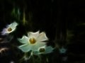 Background white glowing flowers Royalty Free Stock Photography