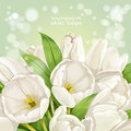 Background with white tulips spring Royalty Free Stock Photos
