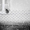 Background winter fence wooden panel wire grey cat with a and a on the window falling snow Stock Photography
