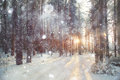 Background winter forest Royalty Free Stock Photo