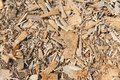 Background of wood chippings many after cutting a tree Royalty Free Stock Photography