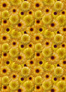 Background_yellow_marigolds_flowers