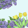 Background with yellow tulips and lilac Stock Photo