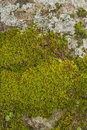 Backgrounds textured moss funds and texture and stones Stock Photography