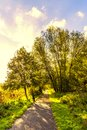 Backlight picture of a group of trees along footpath at sunrise Royalty Free Stock Photo