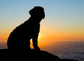 Backlight spaniel sunset Royalty Free Stock Images