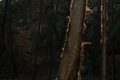 Backlight in trunk the bright mottled bark Stock Images