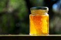 Backlit jar of honey with honeycomb on wood a pure amber colored local glistens in the sun inside the is also a piece the it came Stock Photography