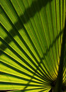 Backlit Palm Leaf Royalty Free Stock Images