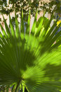 Backlit street palm leaf Royalty Free Stock Photography