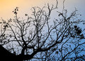 Backlit trees and branches on evening time Royalty Free Stock Photo