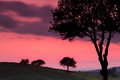 Backlit trees in tuscany sunset view on the tuscan hills with and pink sky Royalty Free Stock Image