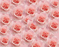 Backround with roses Royalty Free Stock Images
