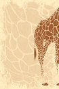 Backside of giraffe grunge beige background with with space for your text Stock Photography