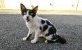 Backstreet Hungry Cat
