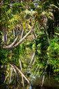 Backwater in jungle Royalty Free Stock Photo